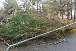 خسارت طوفان در عسلویه/ مسدود شدن راهها و قطع برق